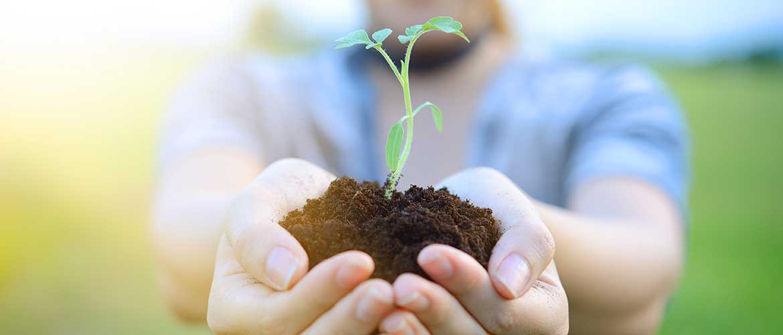 Bild zeigt Mensch mit Pflanze in Hand